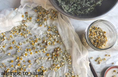 Growing Kid-Friendly Herbs and Using Your Bounty