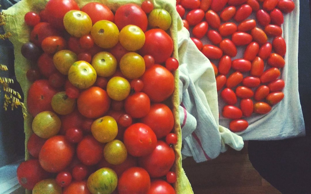 Put a Jar of Summer on Your Shelf: Easy Tomato Sauce Prep